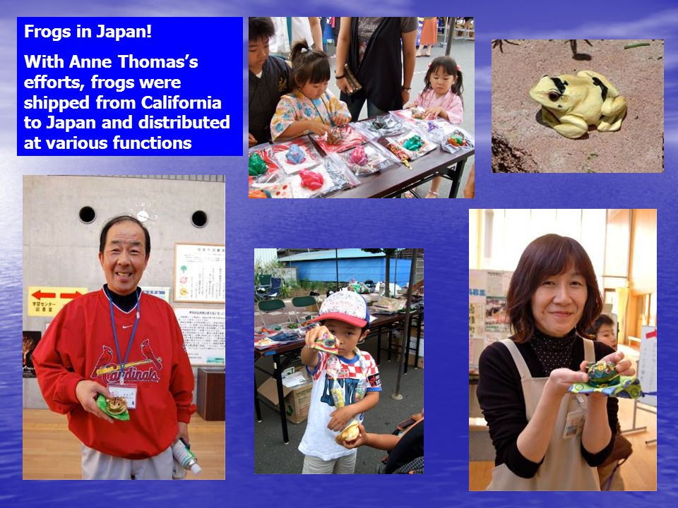 Frogs in Japan! With Anne Thomas's efforts, frogs were shipped from California to Japan and distributed at various functions