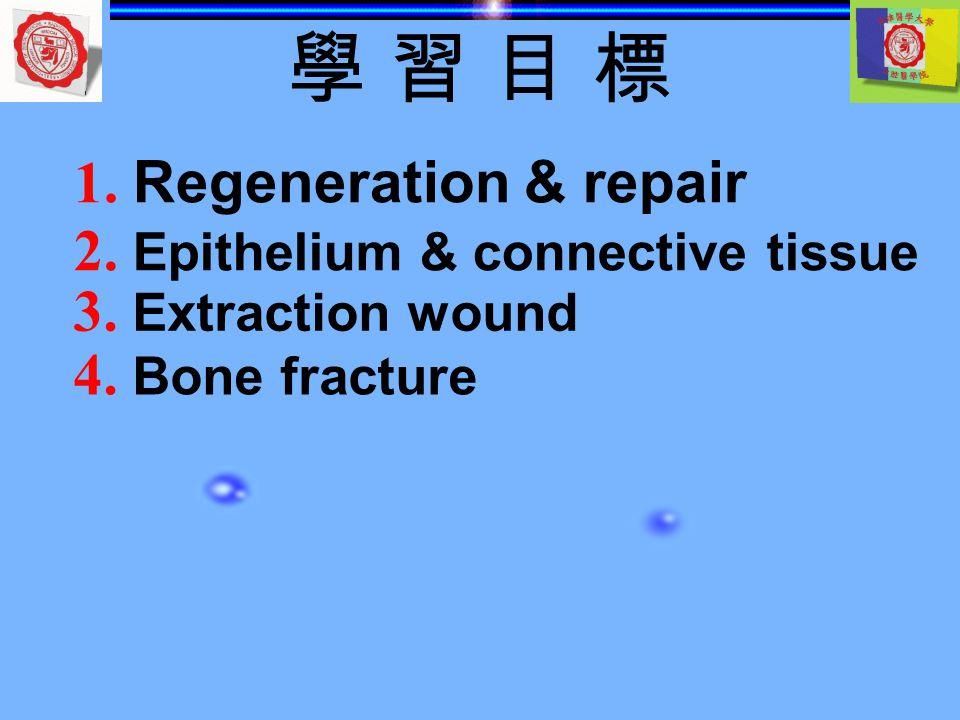 學 習 目 標學 習 目 標 1.Regeneration & repair 2. E pithelium & connective tissue 3.