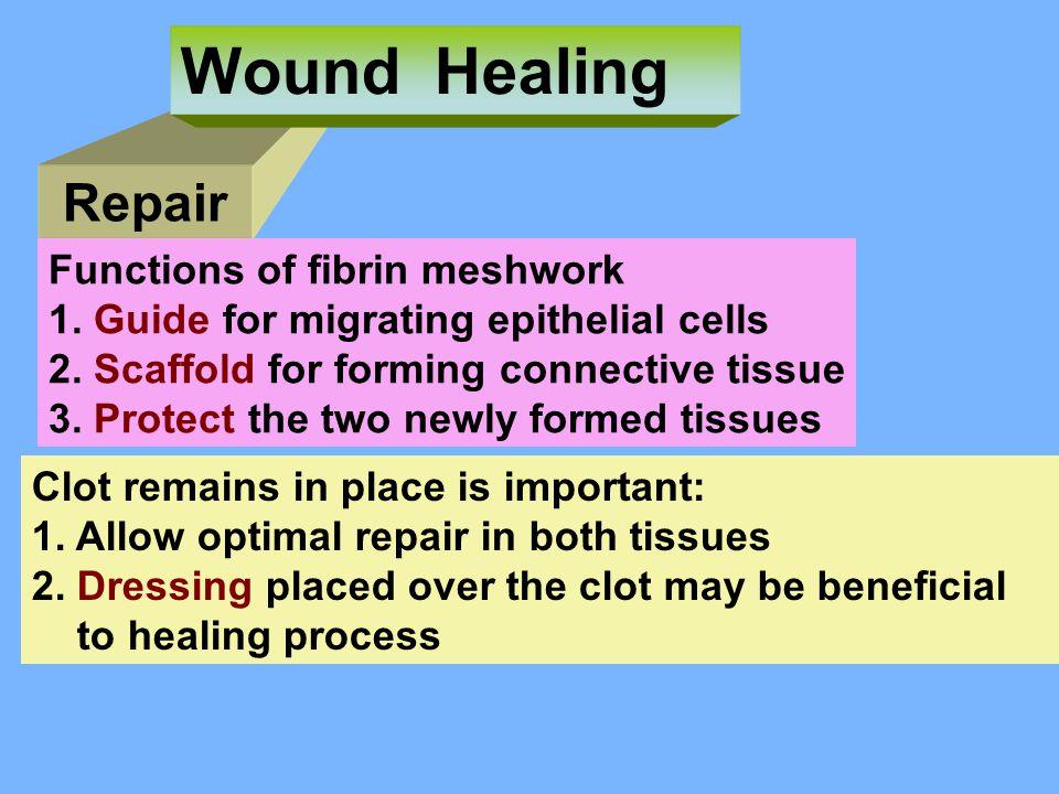 Repair Wound Healing Functions of fibrin meshwork 1.