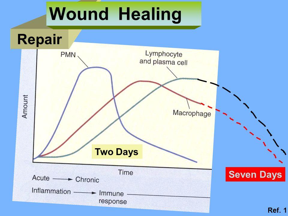 Two Days Seven Days Repair Wound Healing Ref. 1