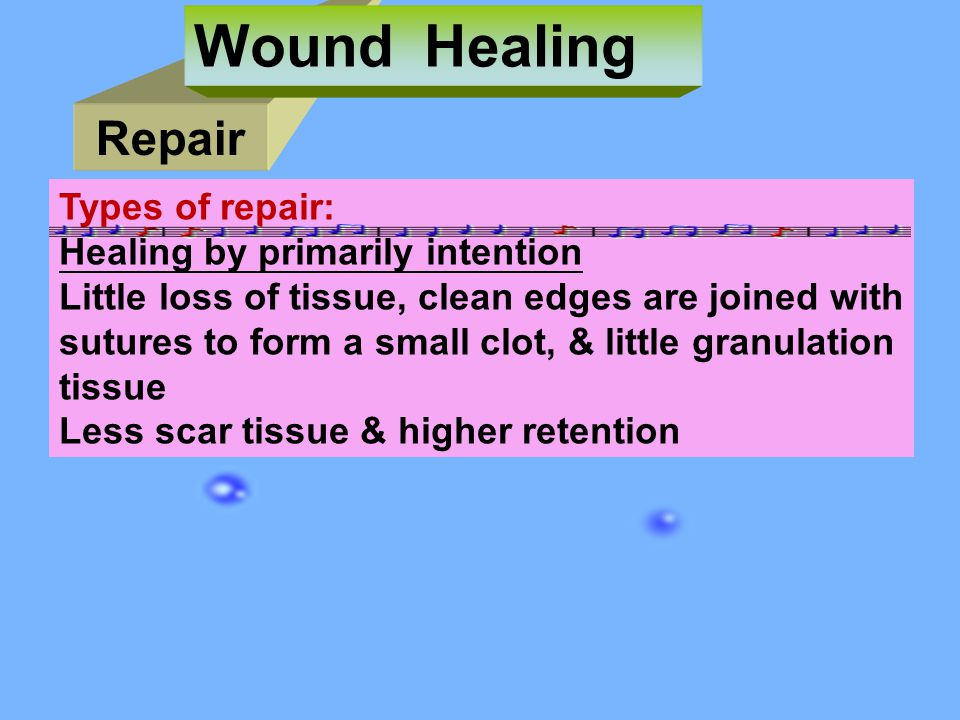 Repair Wound Healing Types of repair: Healing by primarily intention Little loss of tissue, clean edges are joined with sutures to form a small clot, & little granulation tissue Less scar tissue & higher retention