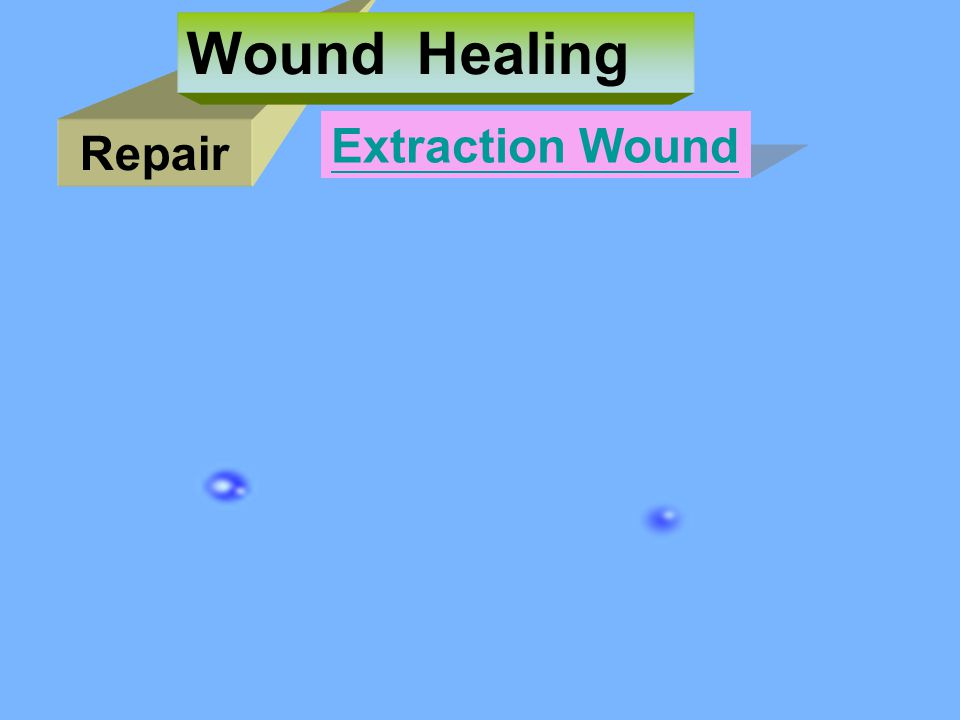 Repair Wound Healing Extraction Wound