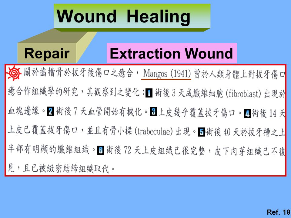 Repair Wound Healing Extraction Wound Ref. 18