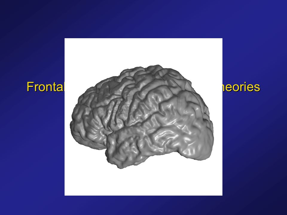 Frontal Lobe vs. Temporal Lobe Theories