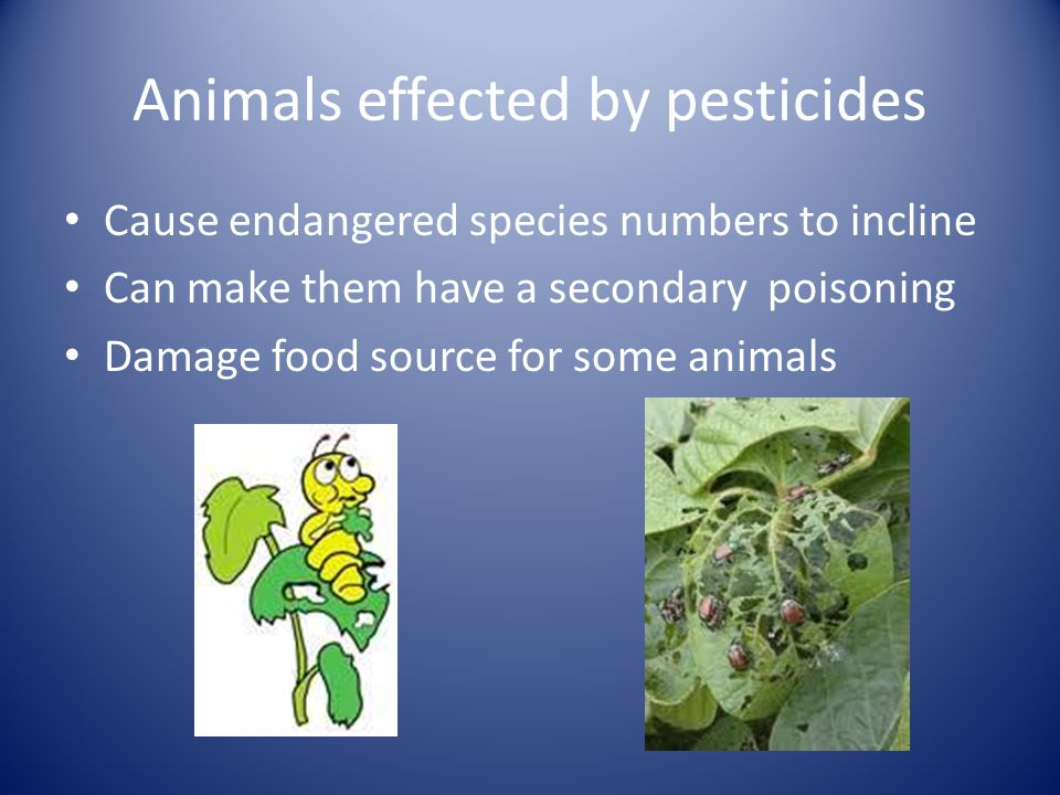 Animals effected by pesticides Cause endangered species numbers to incline Can make them have a secondary poisoning Damage food source for some animal