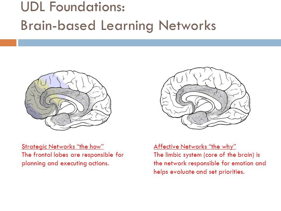 "UDL Foundations: Brain-based Learning Networks Strategic Networks ""the how"" The frontal lobes are responsible for planning and executing actions. Affe"