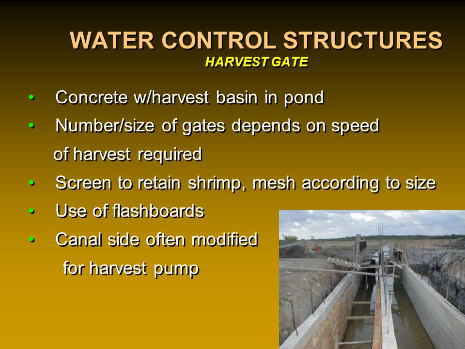 WATER CONTROL STRUCTURES HARVEST GATE Concrete w/harvest basin in pond Number/size of gates depends on speed of harvest required Screen to retain shrimp, mesh according to size Use of flashboards Canal side often modified for harvest pump Concrete w/harvest basin in pond Number/size of gates depends on speed of harvest required Screen to retain shrimp, mesh according to size Use of flashboards Canal side often modified for harvest pump