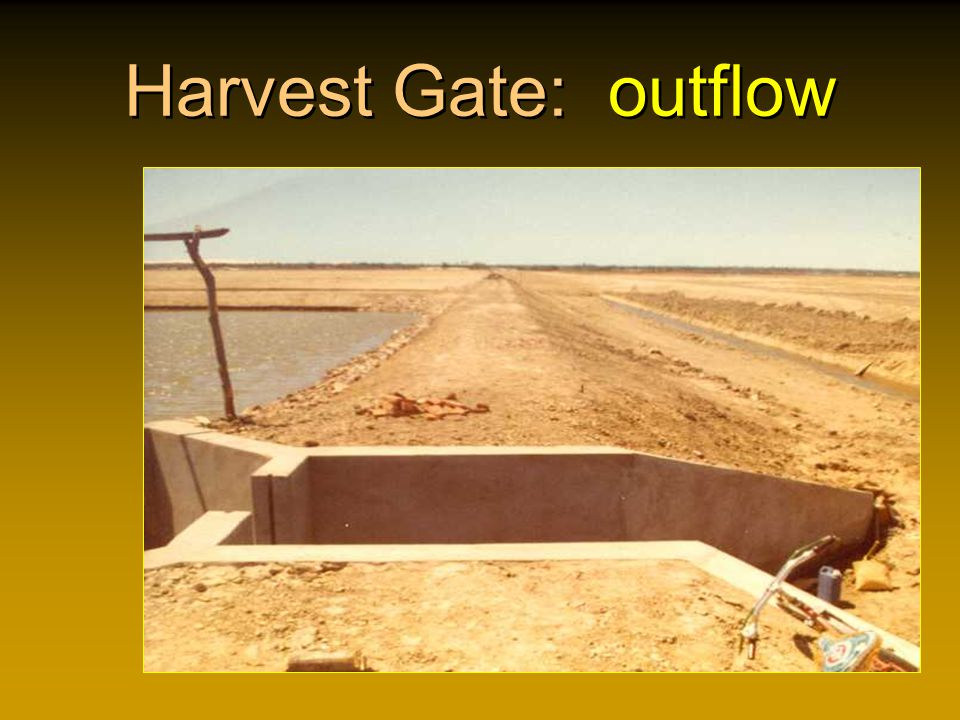 Harvest Gate: outflow