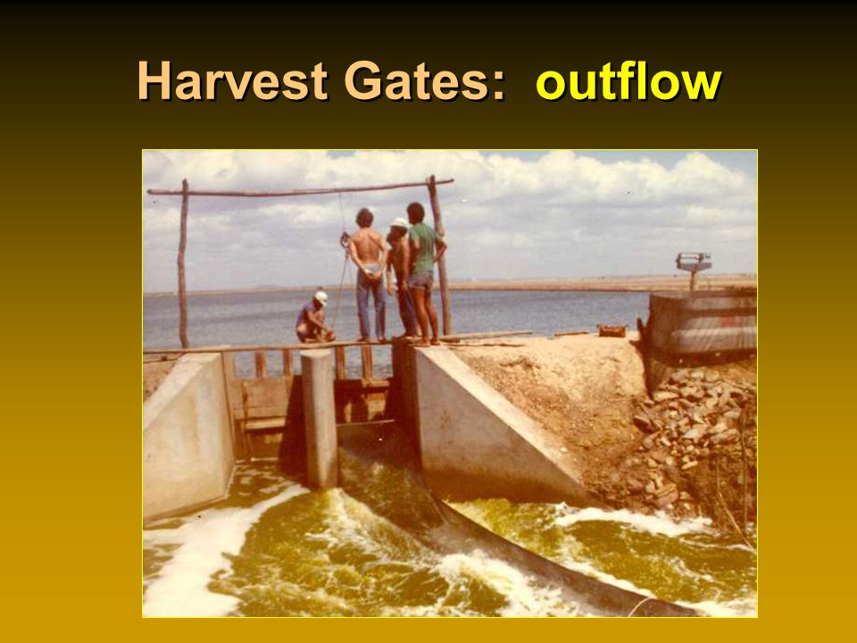 Harvest Gates: outflow