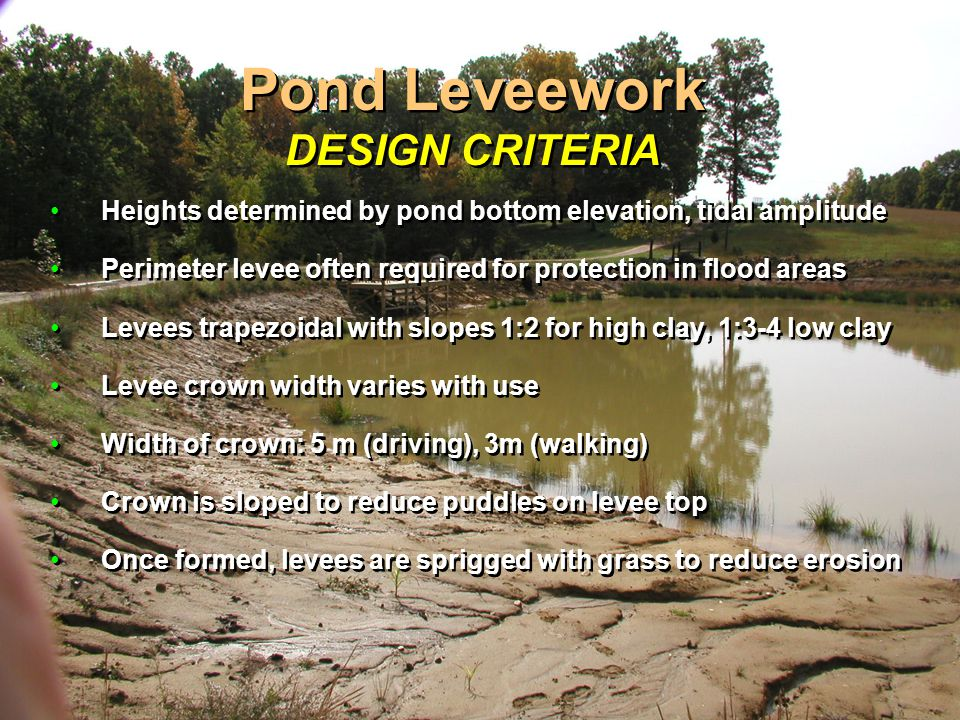 Pond Leveework DESIGN CRITERIA Heights determined by pond bottom elevation, tidal amplitude Perimeter levee often required for protection in flood areas Levees trapezoidal with slopes 1:2 for high clay, 1:3-4 low clay Levee crown width varies with use Width of crown: 5 m (driving), 3m (walking) Crown is sloped to reduce puddles on levee top Once formed, levees are sprigged with grass to reduce erosion Heights determined by pond bottom elevation, tidal amplitude Perimeter levee often required for protection in flood areas Levees trapezoidal with slopes 1:2 for high clay, 1:3-4 low clay Levee crown width varies with use Width of crown: 5 m (driving), 3m (walking) Crown is sloped to reduce puddles on levee top Once formed, levees are sprigged with grass to reduce erosion