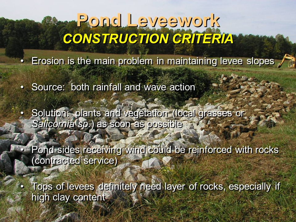 Pond Leveework CONSTRUCTION CRITERIA Erosion is the main problem in maintaining levee slopes Source: both rainfall and wave action Solution: plants and vegetation (local grasses or Salicornia sp.) as soon as possible Pond sides receiving wind could be reinforced with rocks (contracted service) Tops of levees definitely need layer of rocks, especially if high clay content Erosion is the main problem in maintaining levee slopes Source: both rainfall and wave action Solution: plants and vegetation (local grasses or Salicornia sp.) as soon as possible Pond sides receiving wind could be reinforced with rocks (contracted service) Tops of levees definitely need layer of rocks, especially if high clay content