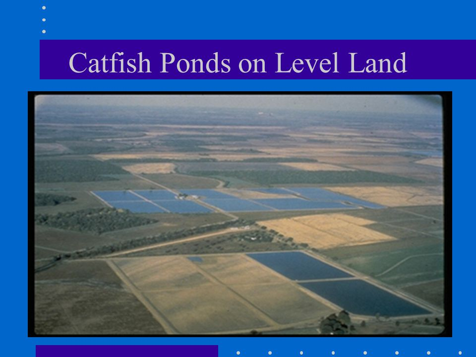 Catfish Ponds on Level Land
