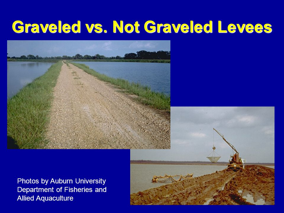 Graveled vs. Not Graveled Levees Photos by Auburn University Department of Fisheries and Allied Aquaculture