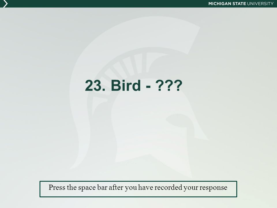 23. Bird - Press the space bar after you have recorded your response