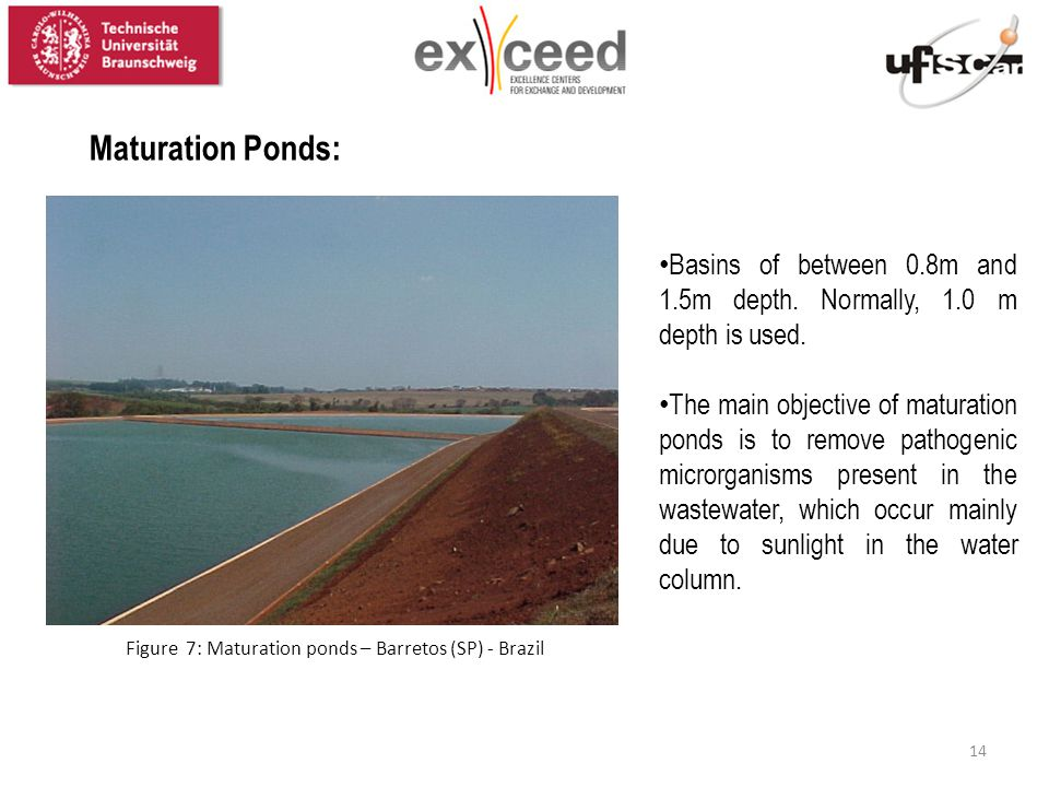 Figure 7: Maturation ponds – Barretos (SP) - Brazil Maturation Ponds: Basins of between 0.8m and 1.5m depth. Normally, 1.0 m depth is used. The main o