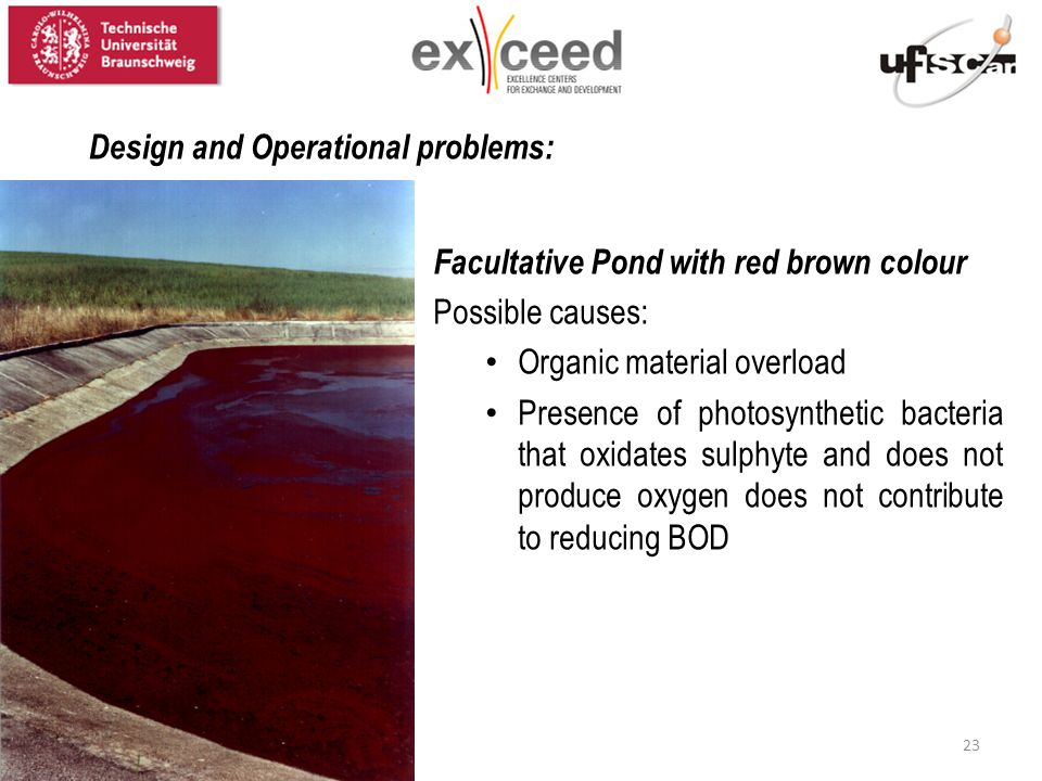 Facultative Pond with red brown colour Possible causes: Organic material overload Presence of photosynthetic bacteria that oxidates sulphyte and does not produce oxygen does not contribute to reducing BOD Design and Operational problems: 23