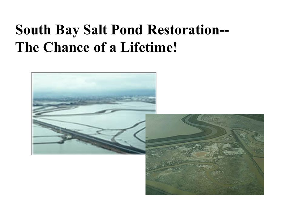 More Key Questions How will the conversion of salt ponds to salt ponds and other habitats affect shorebird and waterfowl numbers.