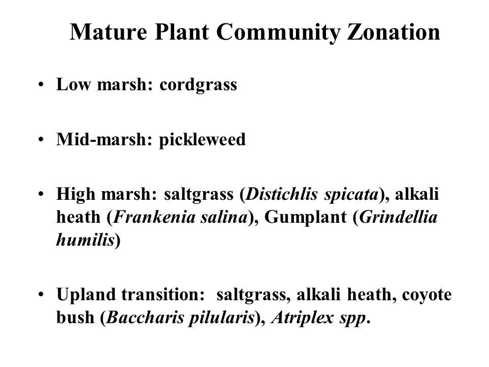 Mature Plant Community Zonation Low marsh: cordgrass Mid-marsh: pickleweed High marsh: saltgrass (Distichlis spicata), alkali heath (Frankenia salina), Gumplant (Grindellia humilis) Upland transition: saltgrass, alkali heath, coyote bush (Baccharis pilularis), Atriplex spp.