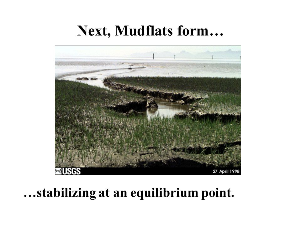 Next, Mudflats form… …stabilizing at an equilibrium point.
