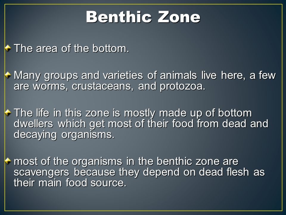Benthic Zone The area of the bottom. The area of the bottom. Many groups and varieties of animals live here, a few are worms, crustaceans, and protozo