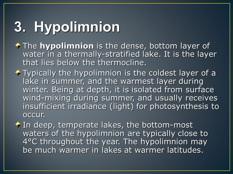 3. Hypolimnion The hypolimnion is the dense, bottom layer of water in a thermally-stratified lake. It is the layer that lies below the thermocline. Ty