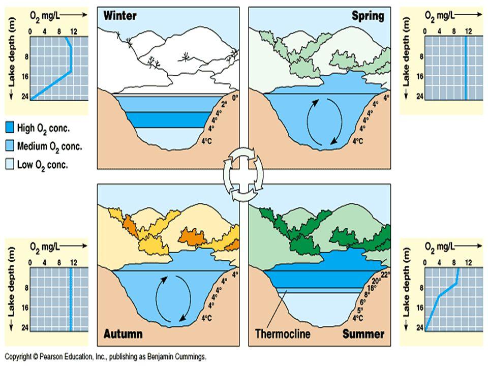 2.Bog Ponds Bog Ponds are often found in the moist temperature regions of North America.