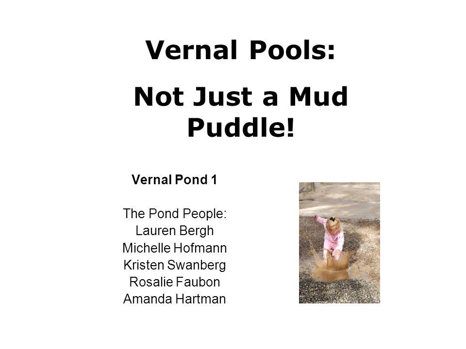 Vernal Pond 1 The Pond People: Lauren Bergh Michelle Hofmann Kristen Swanberg Rosalie Faubon Amanda Hartman Vernal Pools: Not Just a Mud Puddle!