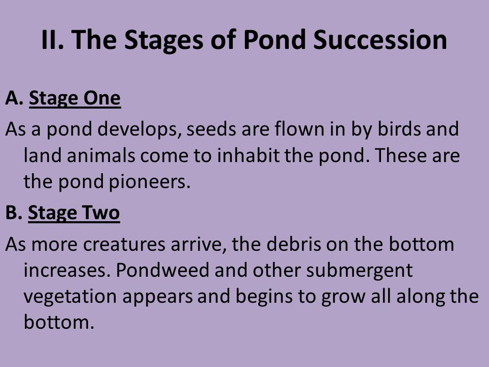 II. The Stages of Pond Succession A. Stage One As a pond develops, seeds are flown in by birds and land animals come to inhabit the pond. These are th