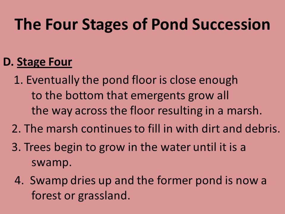 The Four Stages of Pond Succession D. Stage Four 1. Eventually the pond floor is close enough to the bottom that emergents grow all the way across the