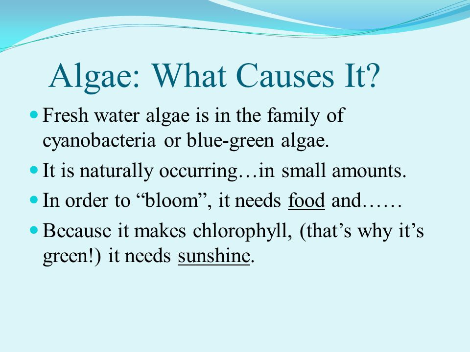 Algae: What Causes It. Fresh water algae is in the family of cyanobacteria or blue-green algae.