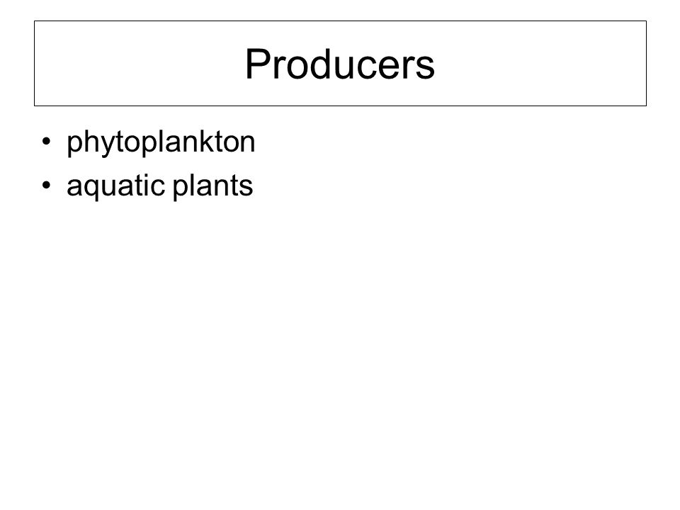 Producers phytoplankton aquatic plants