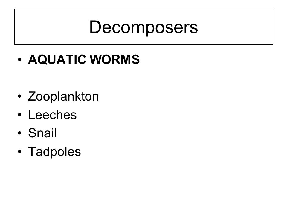 Decomposers AQUATIC WORMS Zooplankton Leeches Snail Tadpoles