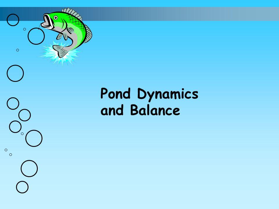 Pond Dynamics and Balance