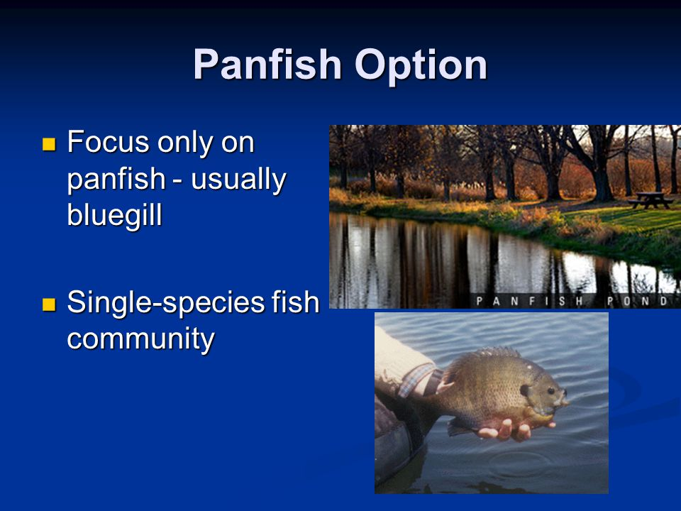Panfish Option Focus only on panfish - usually bluegill Focus only on panfish - usually bluegill Single-species fish community Single-species fish com