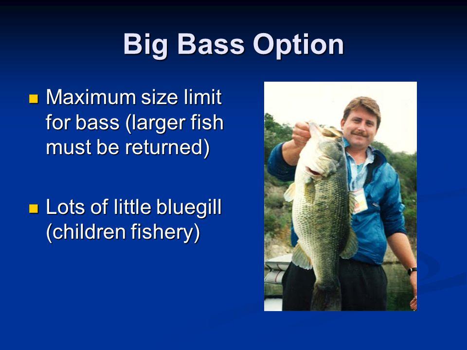 Big Bass Option Maximum size limit for bass (larger fish must be returned) Maximum size limit for bass (larger fish must be returned) Lots of little bluegill (children fishery) Lots of little bluegill (children fishery)