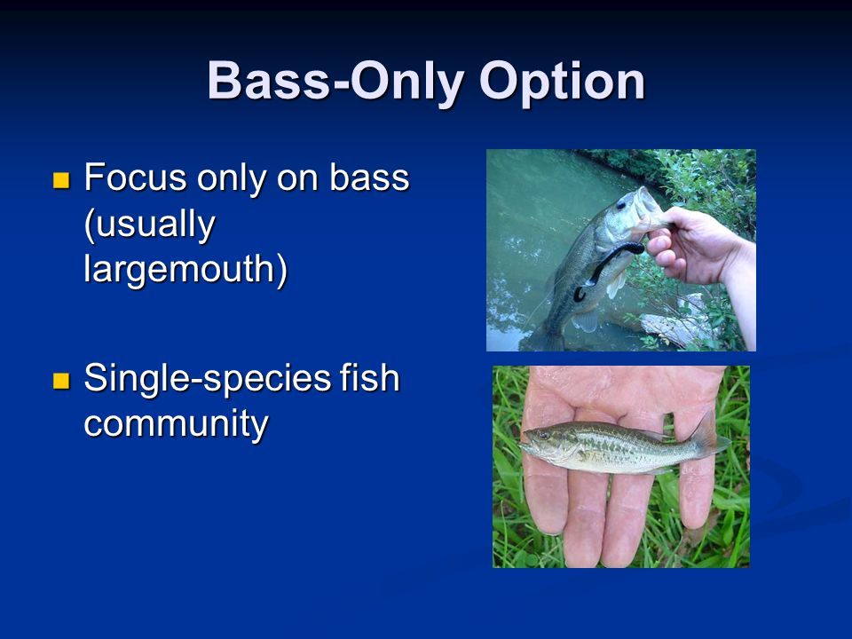 Bass-Only Option Focus only on bass (usually largemouth) Focus only on bass (usually largemouth) Single-species fish community Single-species fish com
