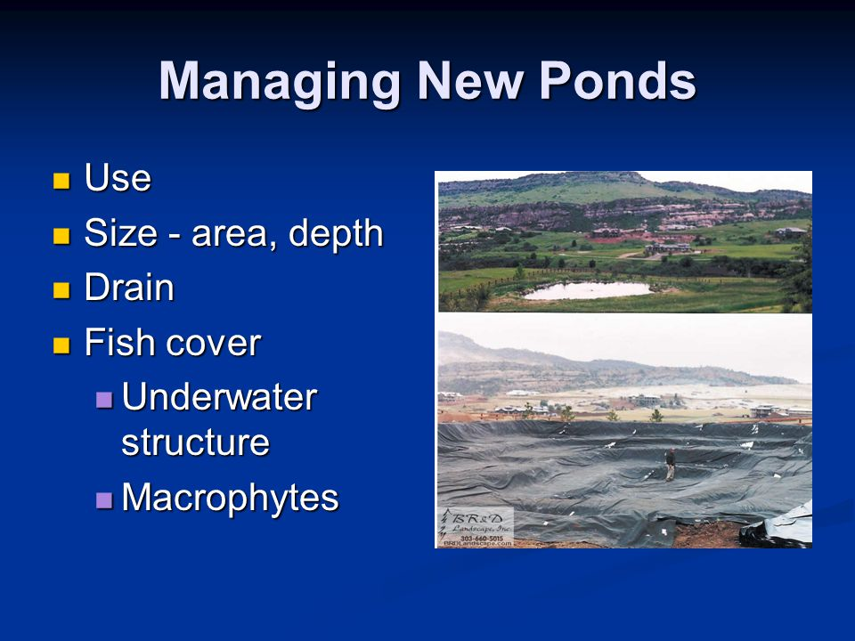 Managing New Ponds Use Use Size - area, depth Size - area, depth Drain Drain Fish cover Fish cover Underwater structure Underwater structure Macrophyt