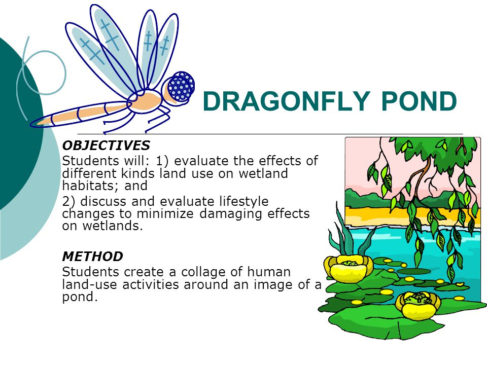 DRAGONFLY POND OBJECTIVES Students will: 1) evaluate the effects of different kinds land use on wetland habitats; and 2) discuss and evaluate lifestyle changes to minimize damaging effects on wetlands.