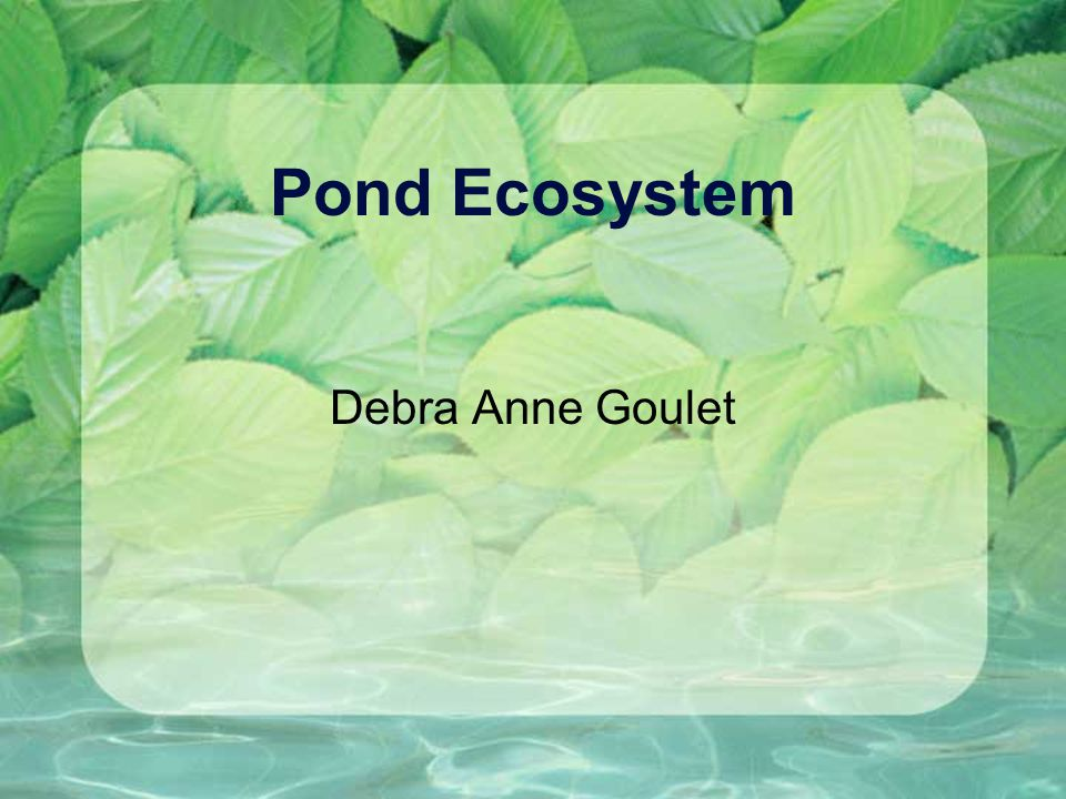Pond Ecosystem Debra Anne Goulet