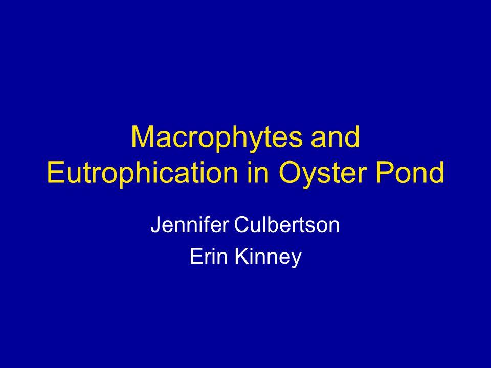 Macrophytes and Eutrophication in Oyster Pond Jennifer Culbertson Erin Kinney
