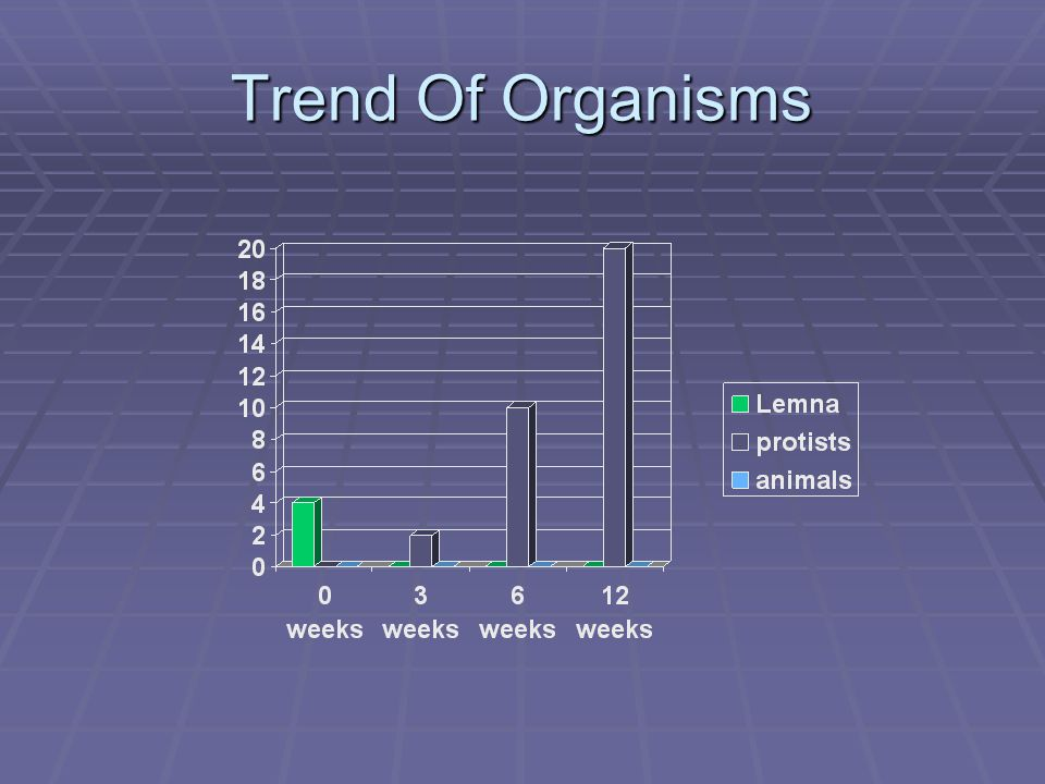 Trend Of Organisms