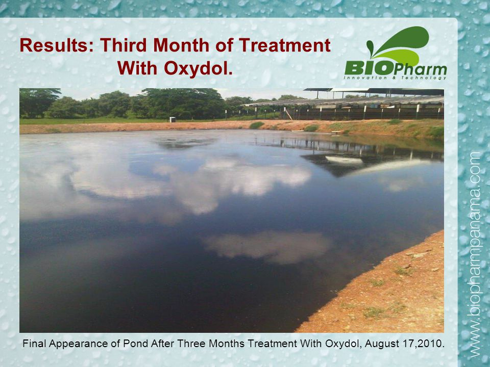 Results: Third Month of Treatment With Oxydol. Final Appearance of Pond After Three Months Treatment With Oxydol, August 17,2010.