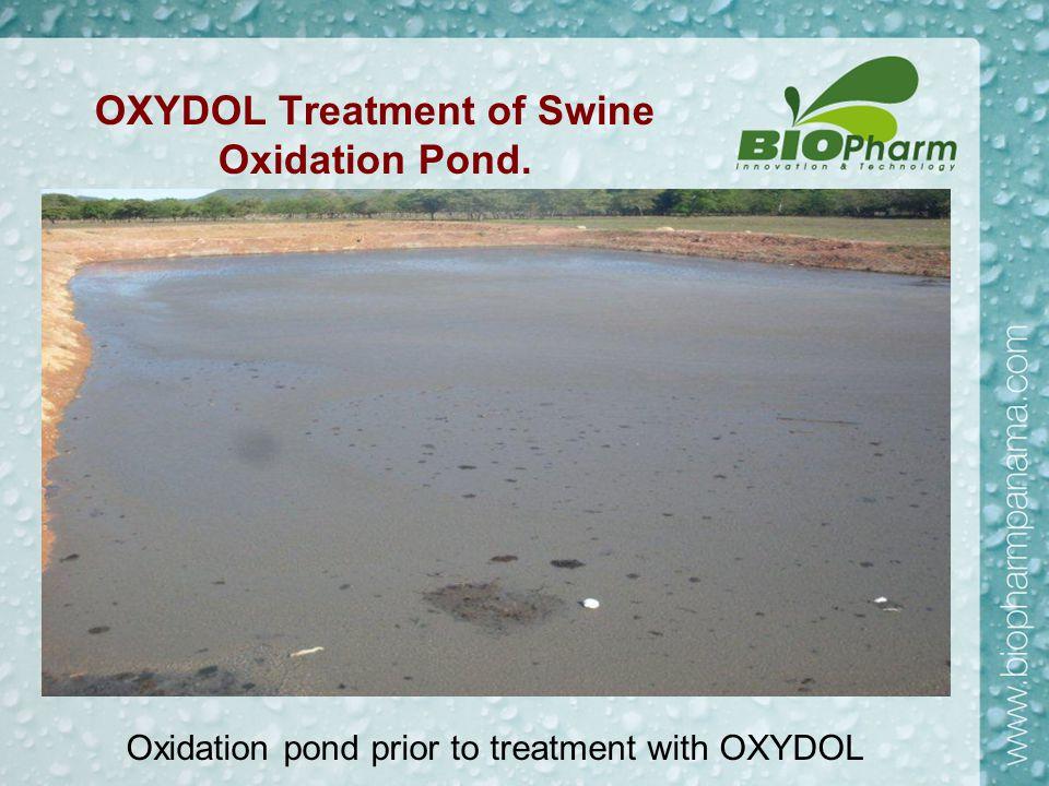 OXYDOL Treatment of Swine Oxidation Pond. Oxidation pond prior to treatment with OXYDOL