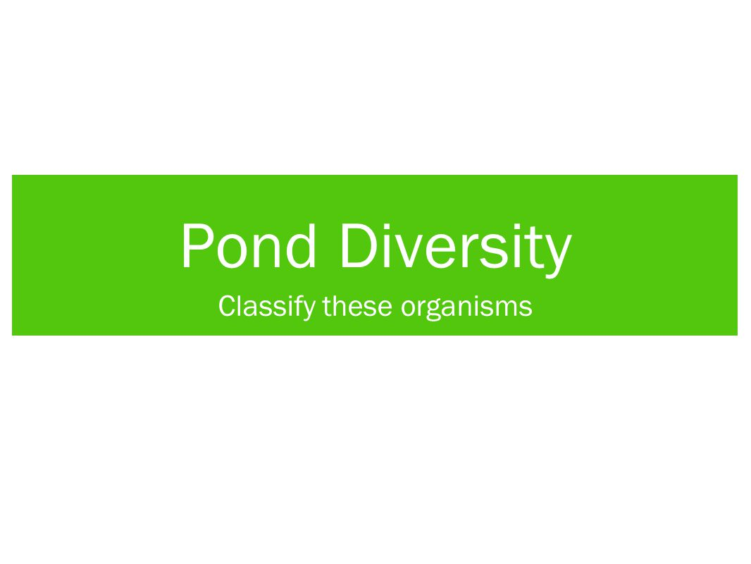 Pond Diversity Classify these organisms