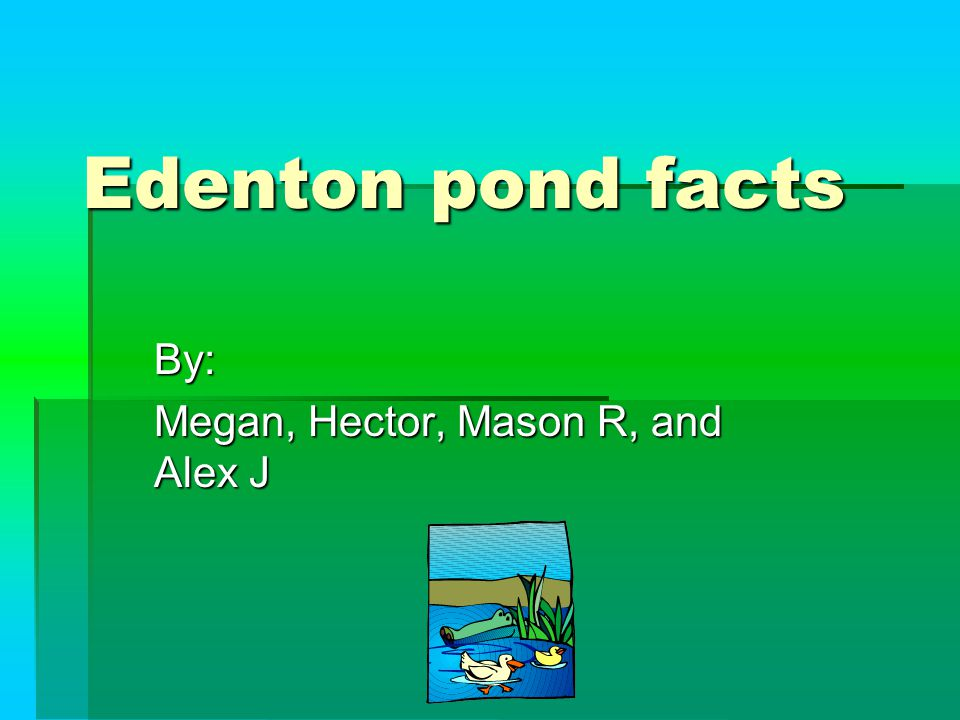 Edenton pond facts By: Megan, Hector, Mason R, and Alex J