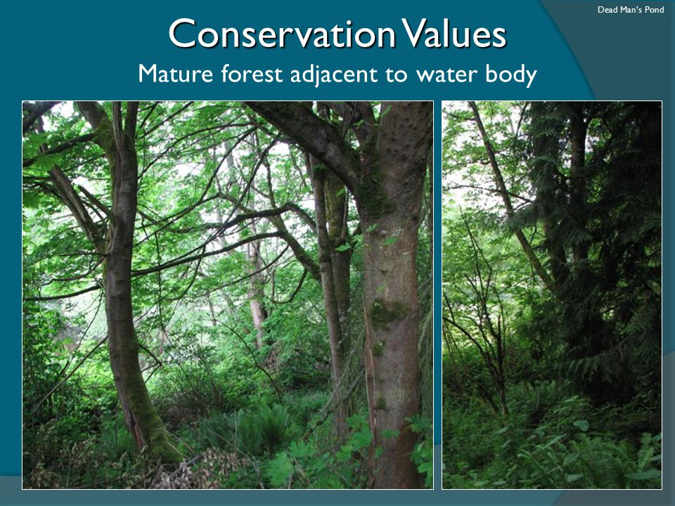 Conservation Values Mature forest adjacent to water body Dead Man's Pond