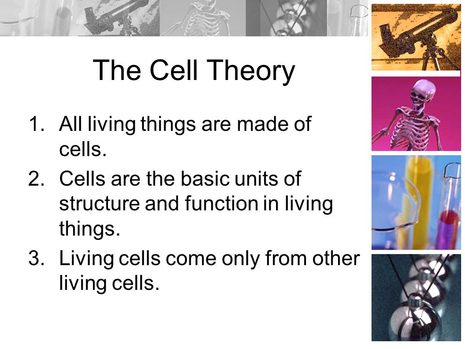 The Cell Theory 1.All living things are made of cells.