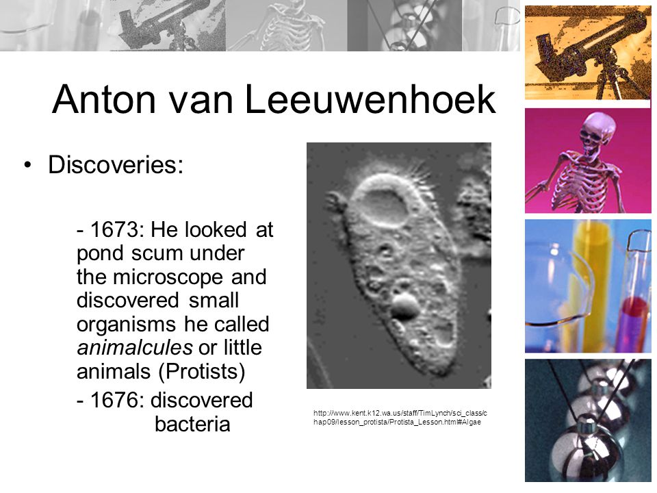 Anton van Leeuwenhoek Discoveries: - 1673: He looked at pond scum under the microscope and discovered small organisms he called animalcules or little animals (Protists) - 1676: discovered bacteria http://www.kent.k12.wa.us/staff/TimLynch/sci_class/c hap09/lesson_protista/Protista_Lesson.html#Algae