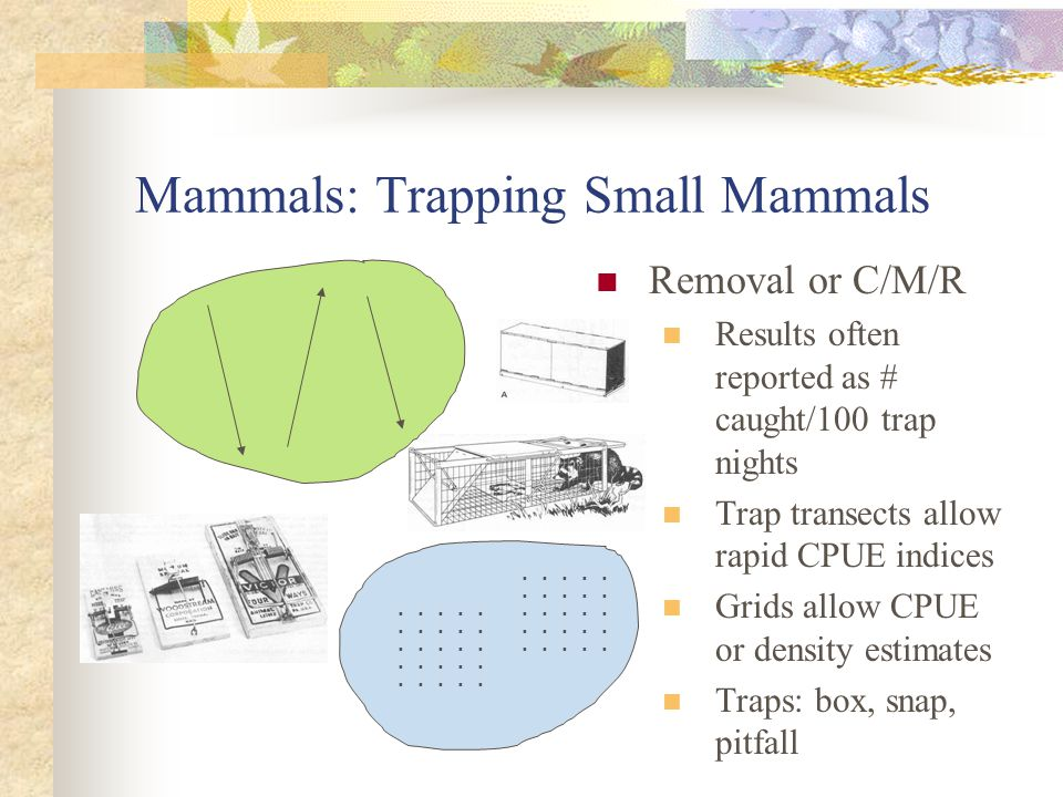 Mammals: Trapping Small Mammals Removal or C/M/R Results often reported as # caught/100 trap nights Trap transects allow rapid CPUE indices Grids allow CPUE or density estimates Traps: box, snap, pitfall ▪ ▪ ▪ ▪ ▪