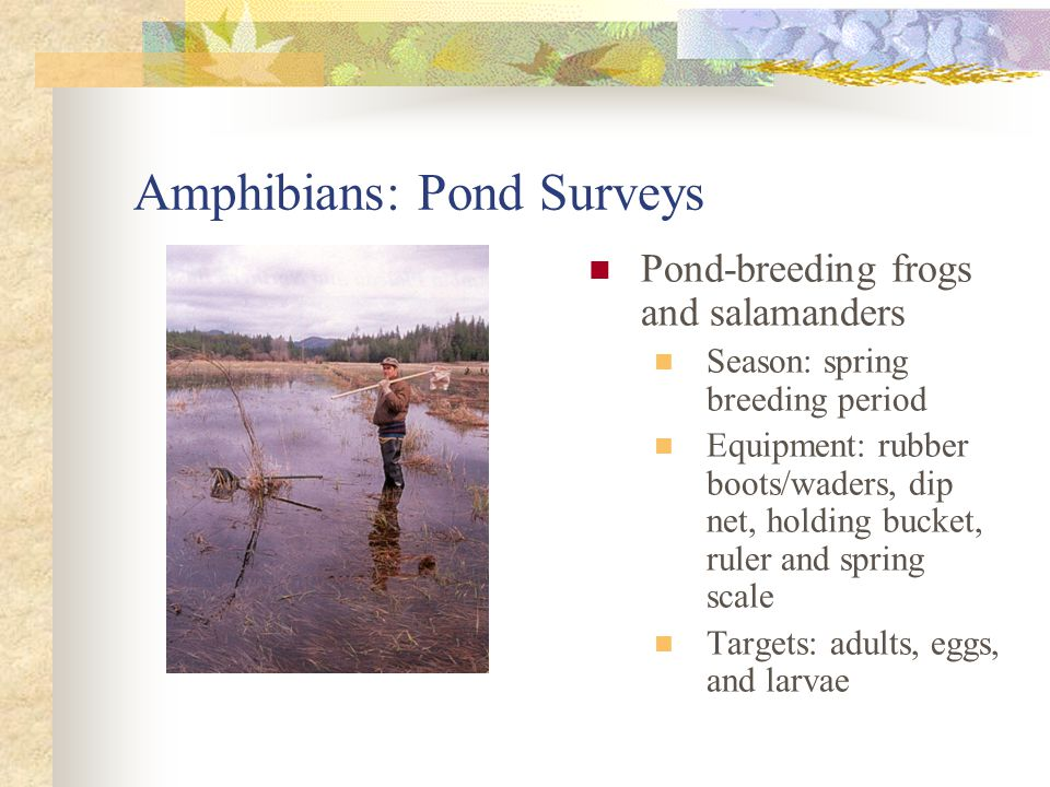 Amphibians: Pond Surveys Search mode by pond zone Shore: Visual Encounter Surveys (VES) for adults Shallow water: VES and net capture of adults, eggs, & larvae Deep water: trapping, diving for adults & larvae